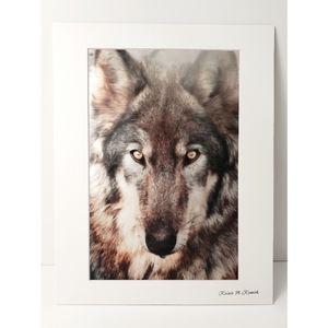 Wolf Photography Print
